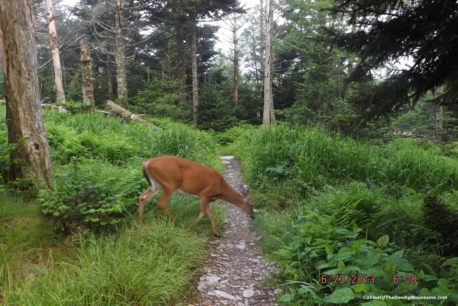 Smoky Mountain Hiking Trails: Mt. LeConte