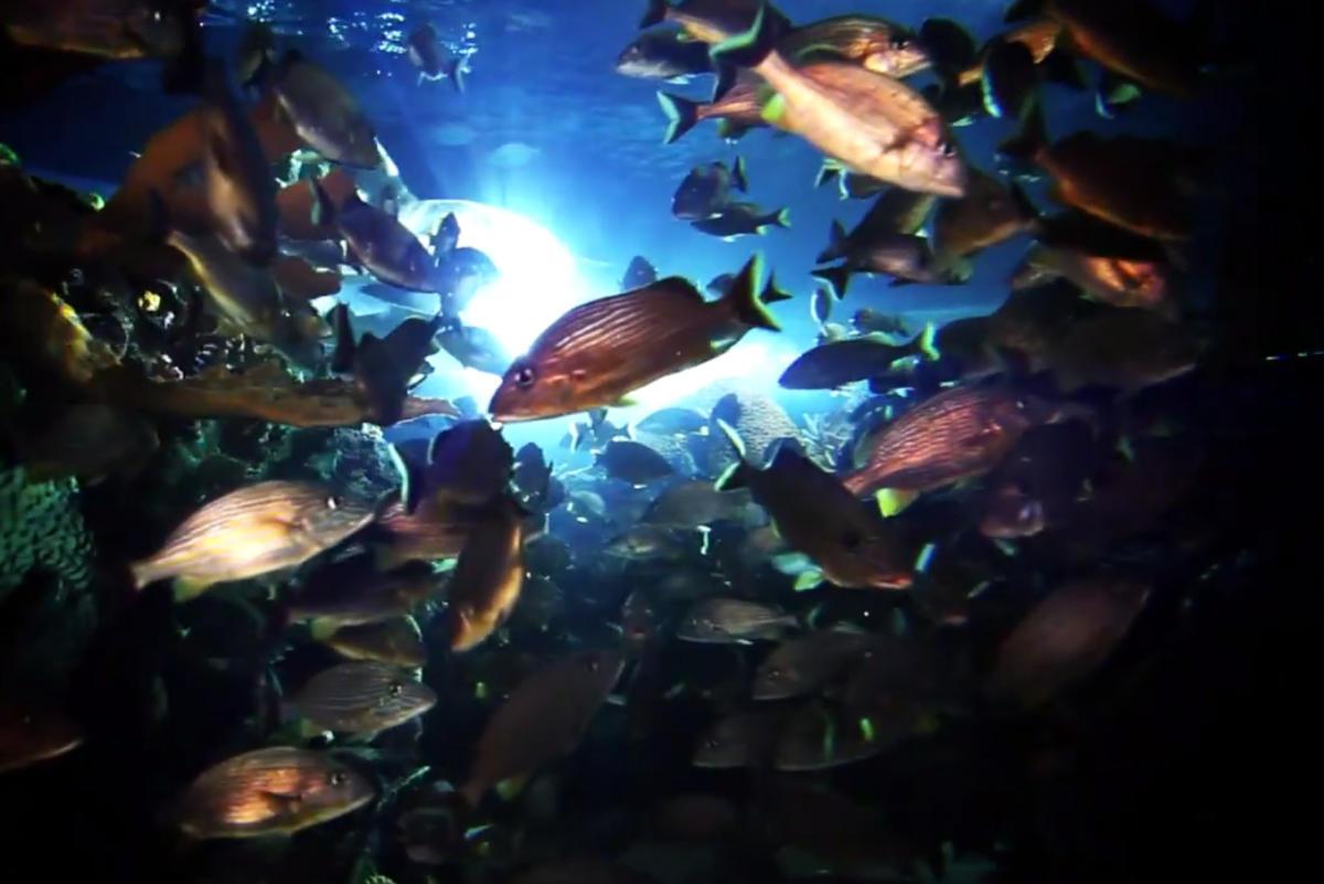 Images courtesy of Ripley's Aquarium
