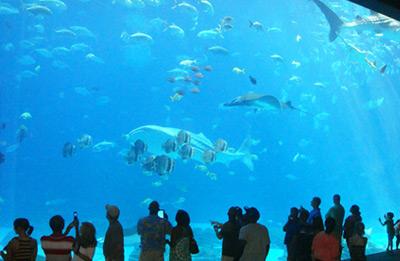 Ripleys Aquarium image