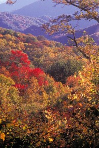 View from Newfound Gap Road - image courtesy National Park Service