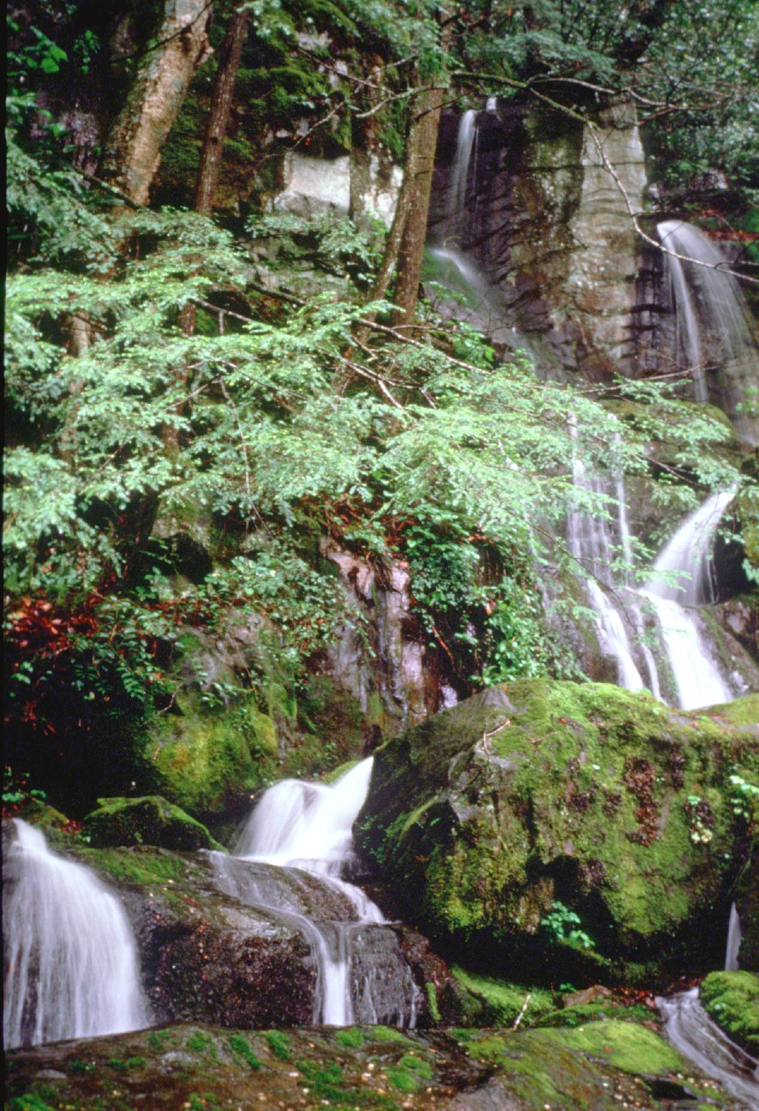Best Smoky Mountain Waterfalls Place Of A Thousand Drips