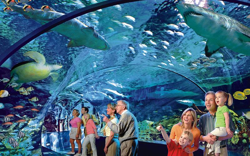 Ripley's Aquarium of the Smokies: Gatlinburg Things To Do